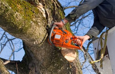Tote Enterpises's Tree Service in Palm Harbor